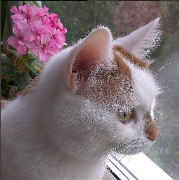 Ёж и герань на окне