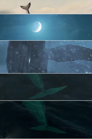 киты9
