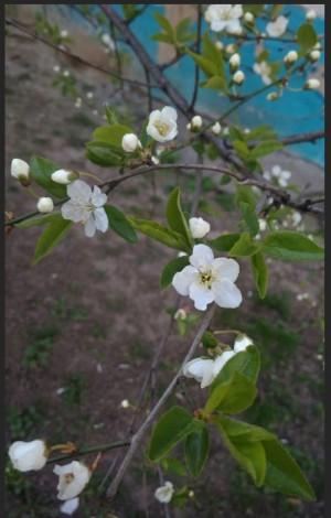 Весна 02